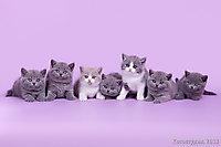Котята все вместе!!! 1 мес.